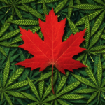 2 Marijuana Stocks To Buy Despite Declining Canadian Sales