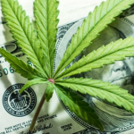 4 Marijuana Stocks To Buy For The Big 2020 Rebound